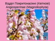 Відділ Покритонасінні (Квіткові) Angiospermae (Magnoliophyta)