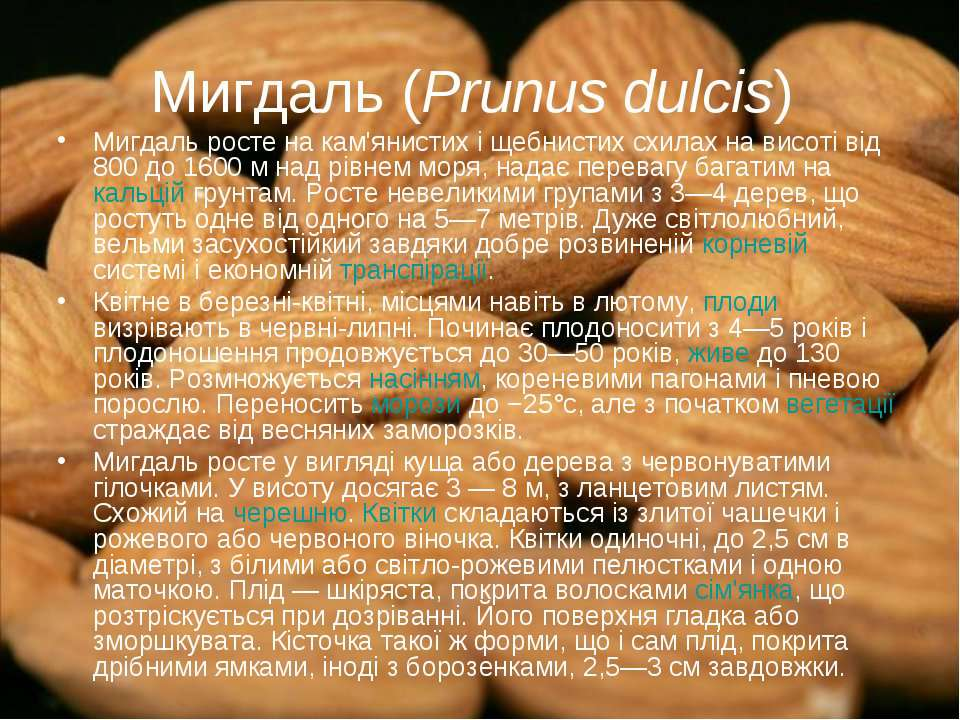 Мигдаль (Prunus dulcis) Мигдаль росте на кам'янистих і щебнистих схилах на ви...