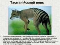 Тасманійський вовк Тасманійський вовк жив у Австралії і на острові Тасманія. ...