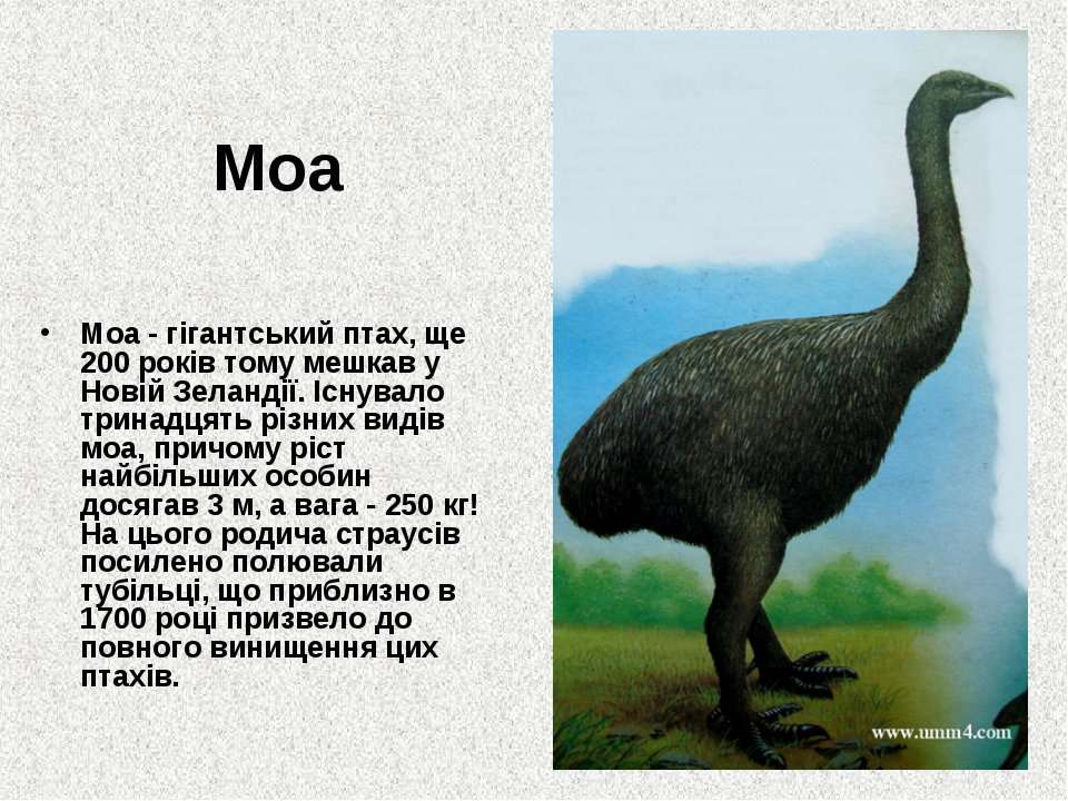 Моа Моа - гігантський птах, ще 200 років тому мешкав у Новій Зеландії. Існува...