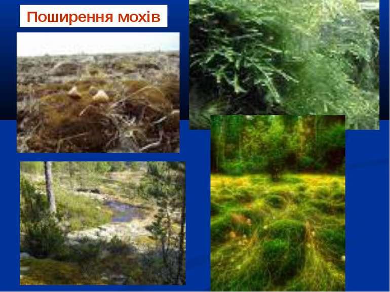 Поширення мохів