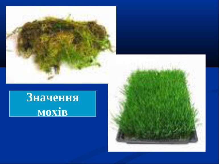 Значення мохів