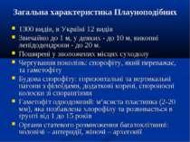 Загальна характеристика Плауноподібних 1300 видів, в Україні 12 видів Звичайн...