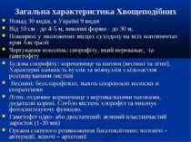 Загальна характеристика Хвощеподібних Понад 30 видів, в Україні 9 видів Від 1...