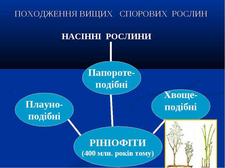 ПОХОДЖЕННЯ ВИЩИХ СПОРОВИХ РОСЛИН РІНІОФІТИ (400 млн. років тому) Плауно- поді...