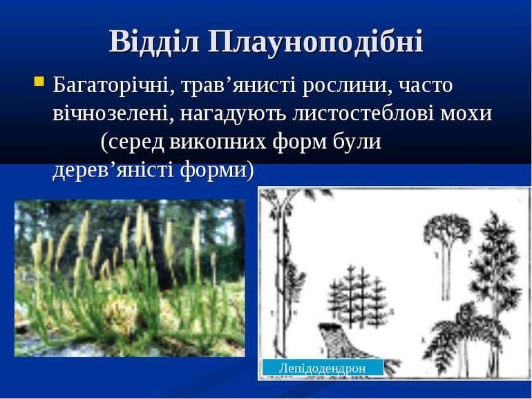 Відділ Плауноподібні Багаторічні, трав'янисті рослини, часто вічнозелені, наг...