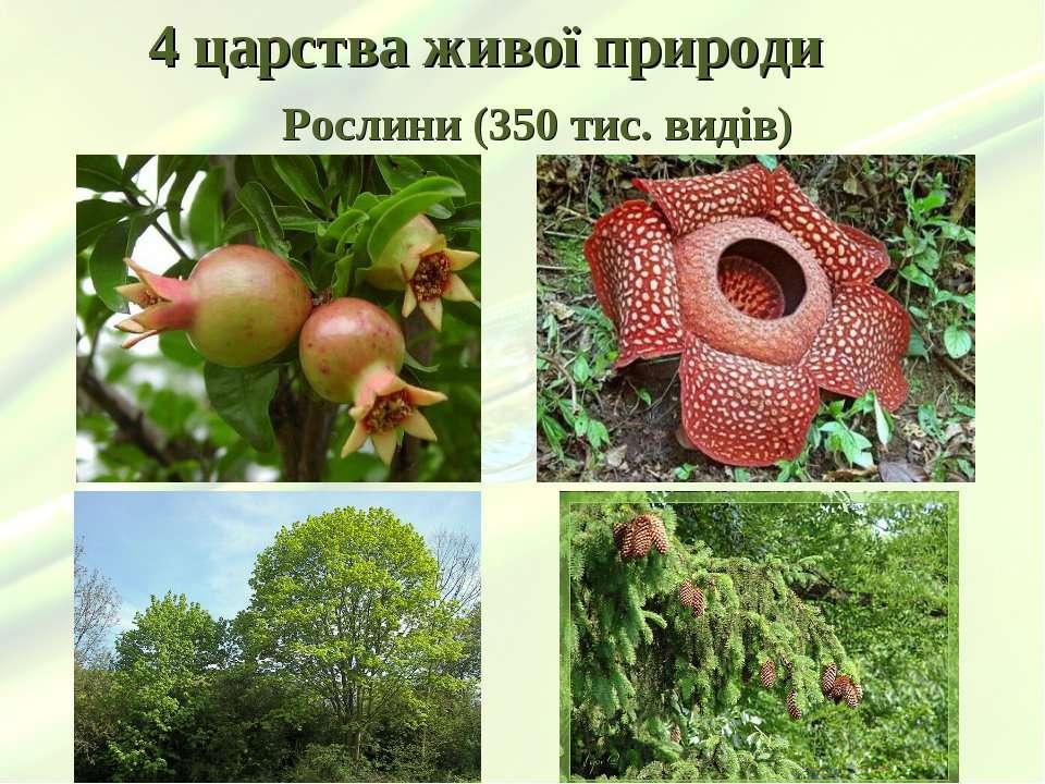 4 царства живої природи Рослини (350 тис. видів)