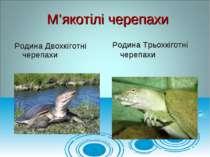 Родина Двохкіготні черепахи М'якотілі черепахи Родина Трьохкіготні черепахи