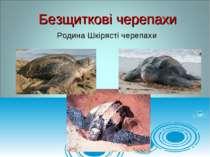Родина Шкірясті черепахи Безщиткові черепахи