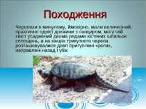 Черепахи в минулому, ймовірно, мали величезний, практично однієї довжини з па...