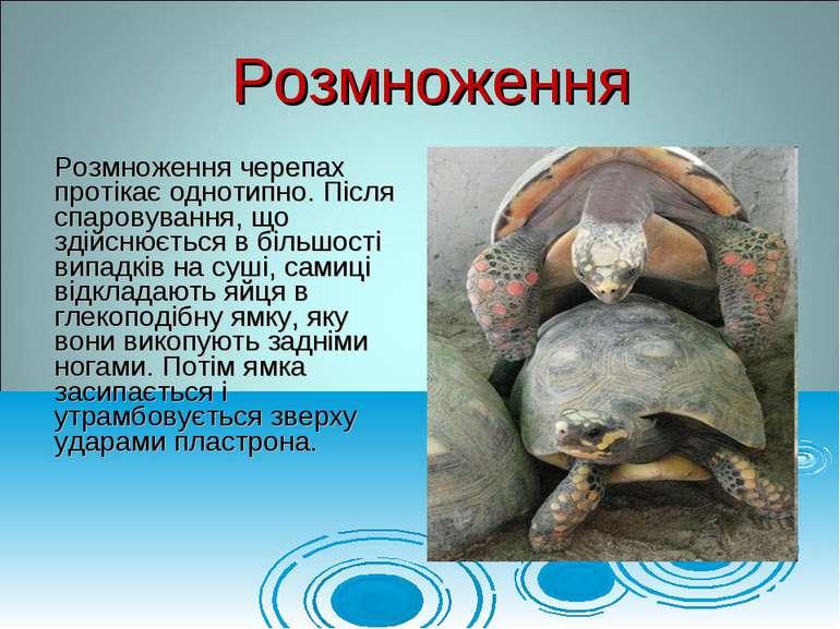 Розмноження черепах протікає однотипно. Після спаровування, що здійснюється в...