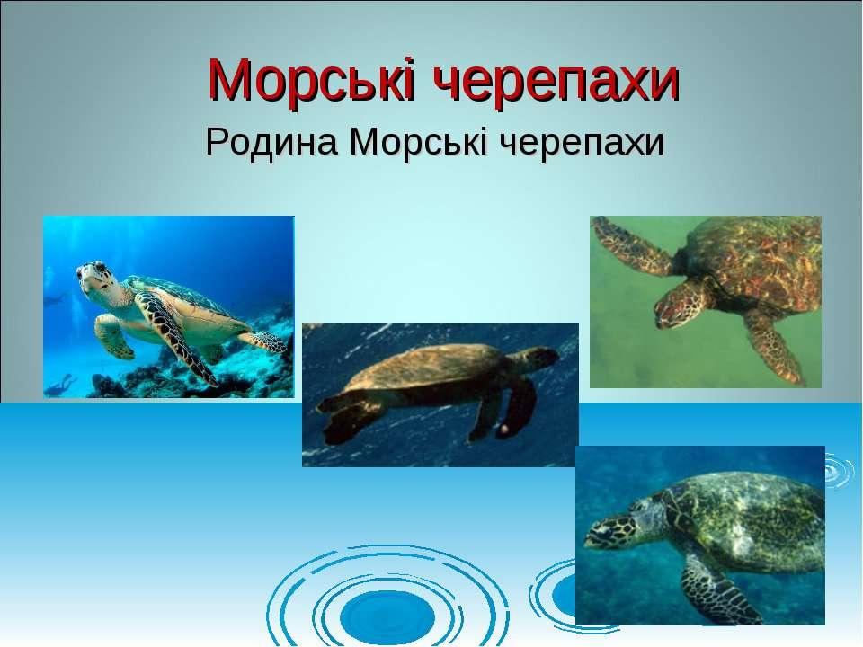 Родина Морські черепахи Морські черепахи