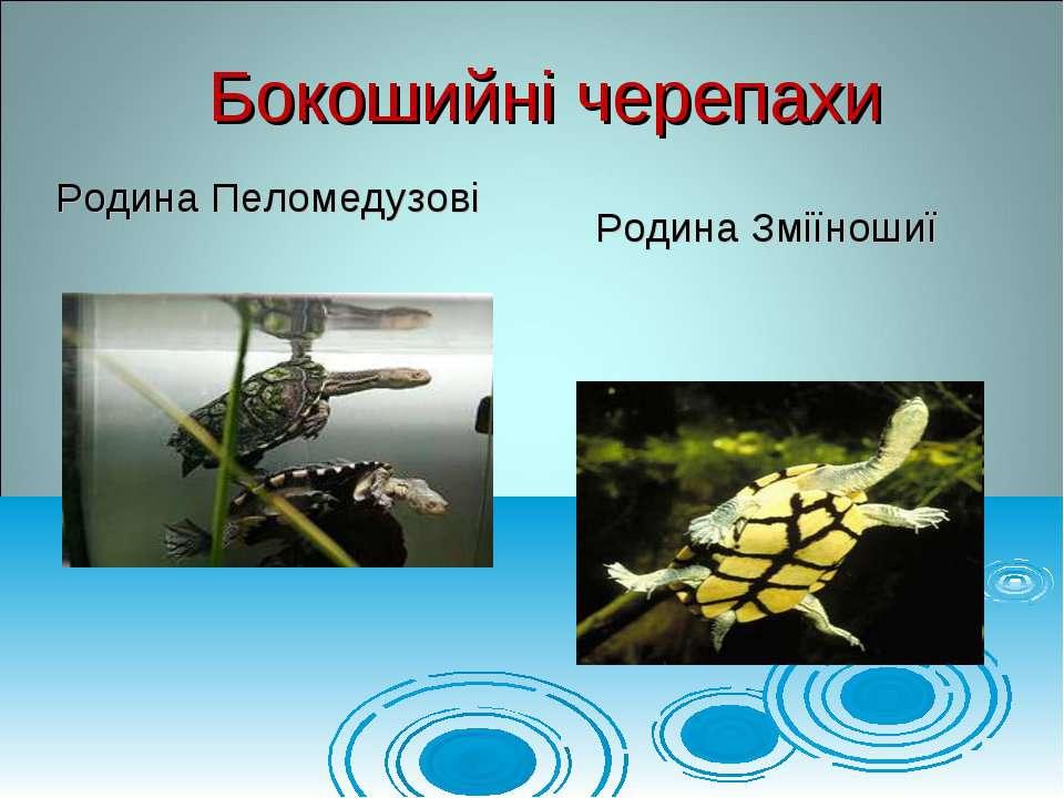 Родина Пеломедузові Бокошийні черепахи Родина Зміїношиї