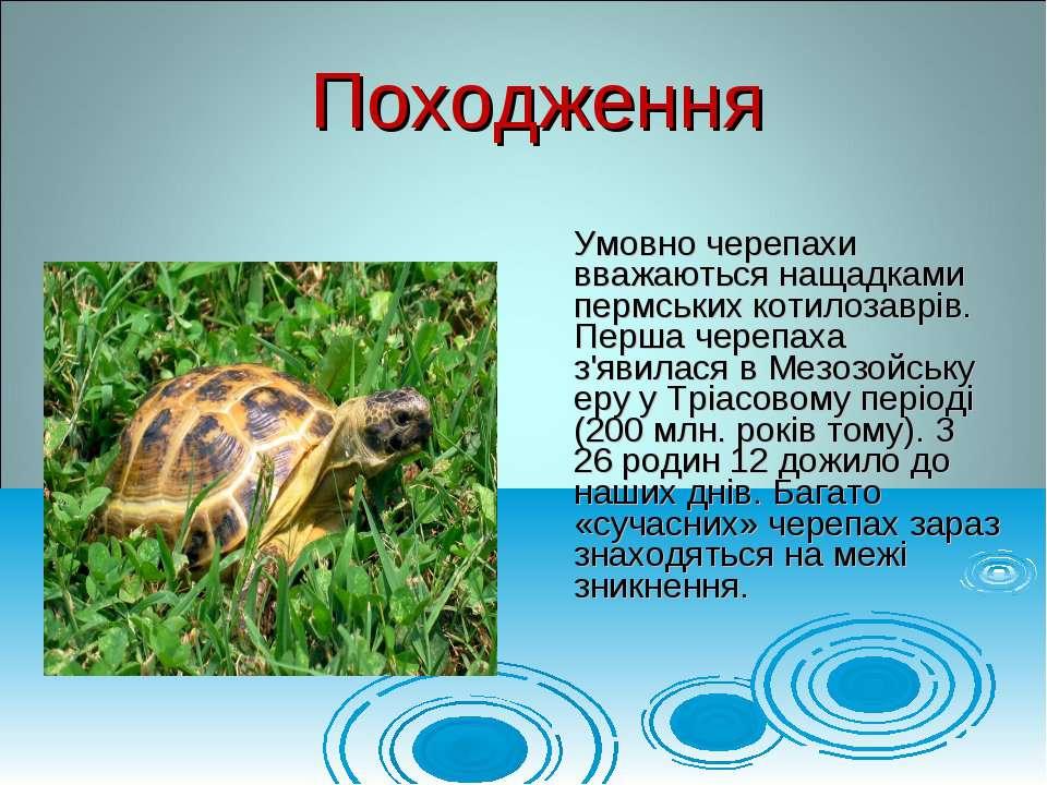 Умовно черепахи вважаються нащадками пермських котилозаврів. Перша черепаха з...