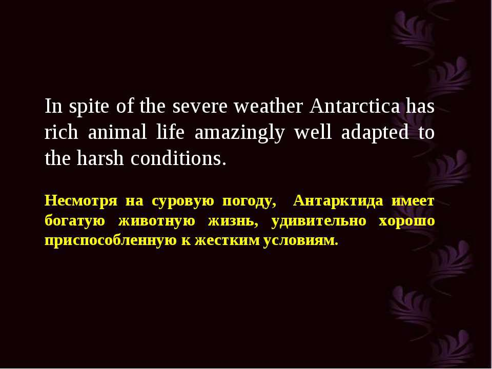 In spite of the severe weather Antarctica has rich animal life amazingly well...