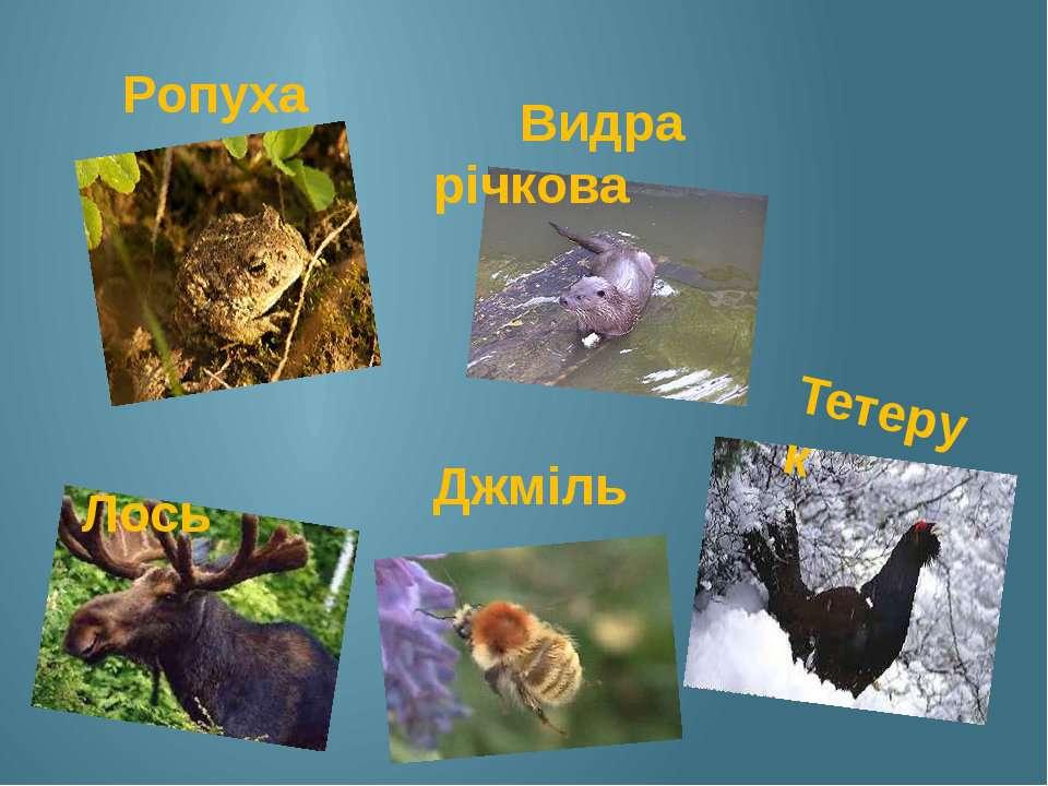 Ропуха Видра річкова Лось Джміль Тетерук