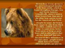 Brown Bear (Ursus arctos) is the most widespread member of the bear family, w...
