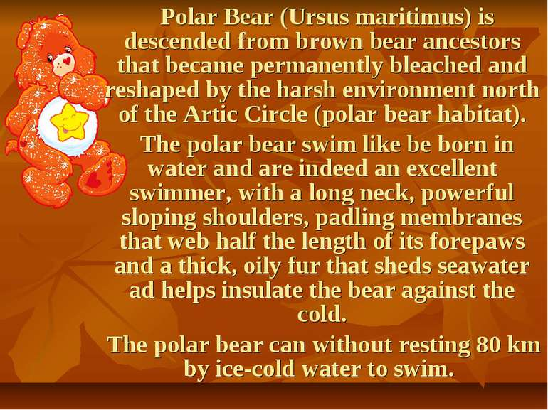 Polar Bear (Ursus maritimus) is descended from brown bear ancestors that beca...