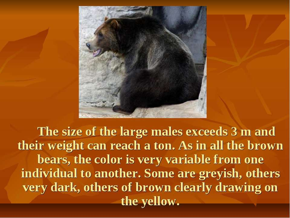 The size of the large males exceeds 3 m and their weight can reach a ton. As ...
