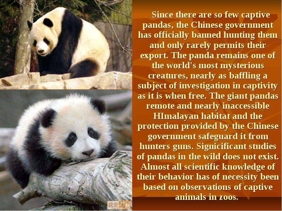 Since there are so few captive pandas, the Chinese government has officially ...