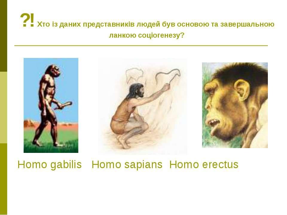 Homo gabilis Homo sapians Homo erectus ?! Хто із даних представників людей бу...