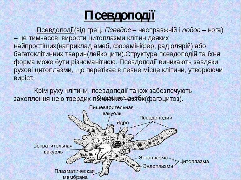 Псевдоподії Псевдоподії(від грец. Псевдос – несправжній і подос – нога) – це ...