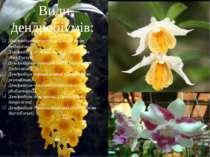 Дендробіум прекрасний (Dendrobium bellatulum) Дендробіум густоцвітний (Dendro...