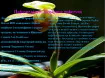 Пафіопеділум, Венерина туфелька Поєднує близько 60 природніх видів і більше 1...