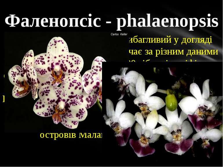 Фаленопсіс - phalaenopsis Найбільш популярний і невибагливий у догляді вид ро...