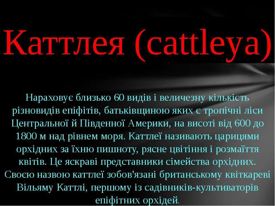 Каттлея (cattleya) Нараховує близько 60 видів і величезну кількість різновиді...