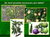 До якої родини належать рослини?