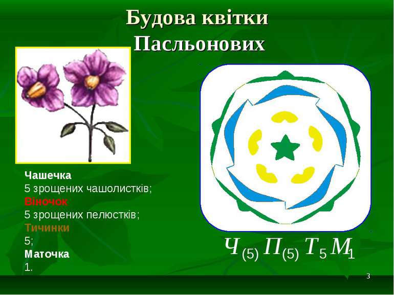 * Будова квітки Пасльонових Чашечка 5 зрощених чашолистків; Віночок 5 зрощени...