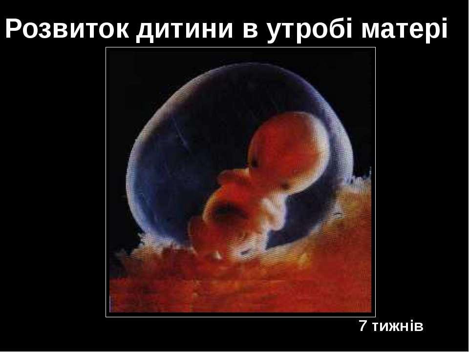 7 тижнів Розвиток дитини в утробі матері