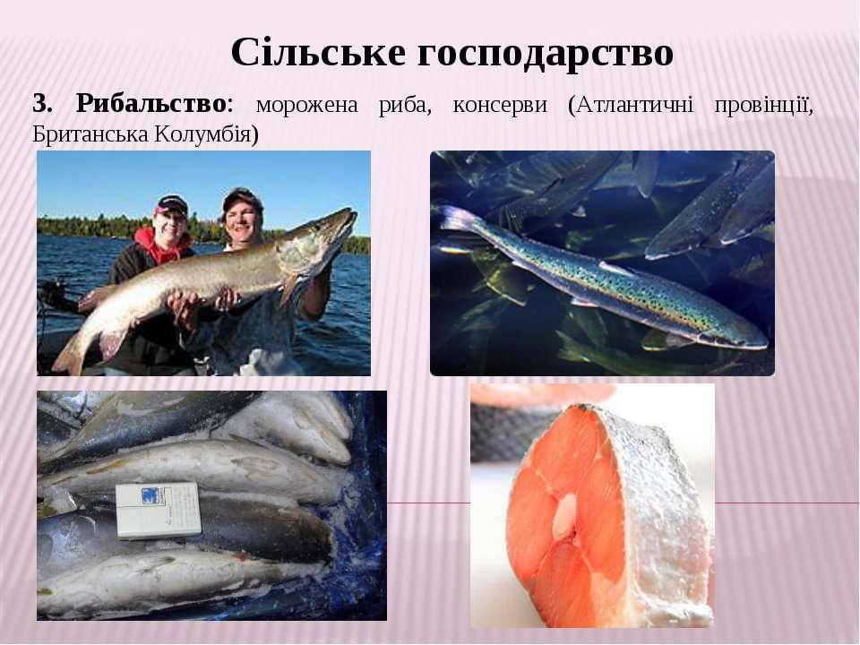 Сільське господарство 3. Рибальство: морожена риба, консерви (Атлантичні пров...