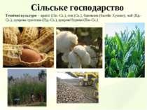 Сільське господарство Технічні культури – арахіс (Пн.-Сх.), соя (Сх.), бавовн...