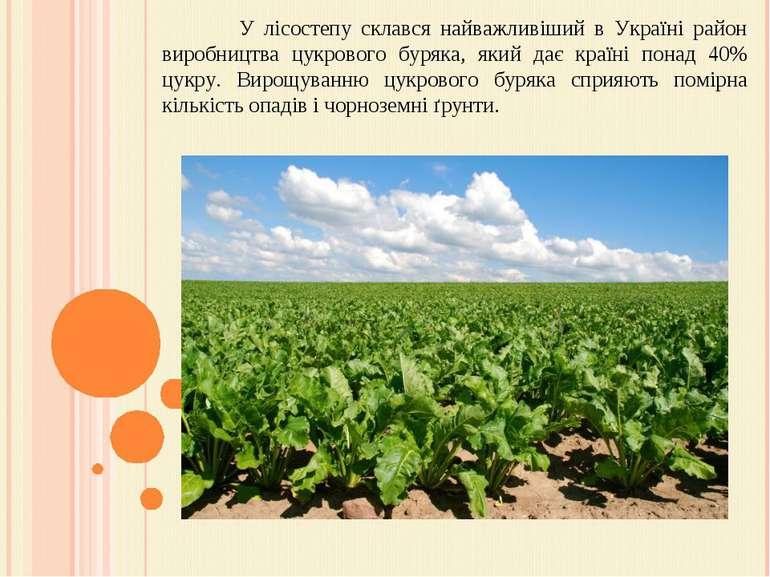 У лісостепу склався найважливіший в Україні район виробництва цукрового буряк...