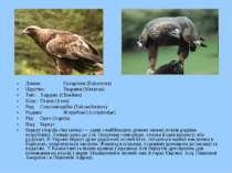 Домен: Еукаріоти (Eukaryota) Царство: Тварини (Metazoa) Тип: Хордові (Chordat...