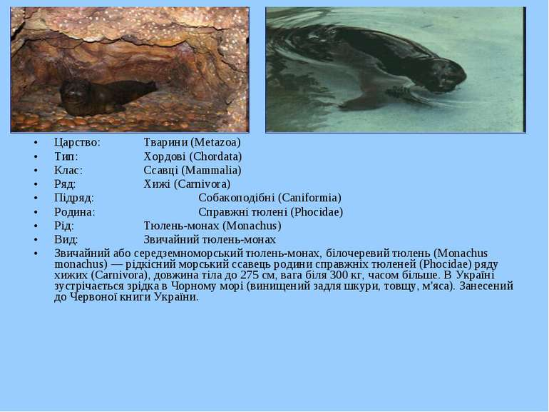 Царство: Тварини (Metazoa) Тип: Хордові (Chordata) Клас: Ссавці (Mammalia) Ря...