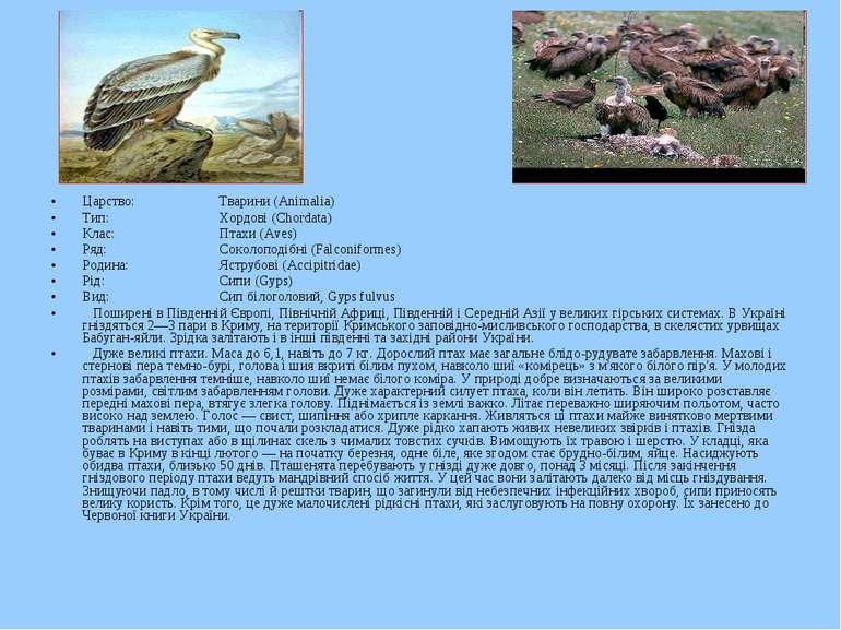 Царство: Тварини (Animalia) Тип: Хордові (Chordata) Клас: Птахи (Aves) Ряд: С...