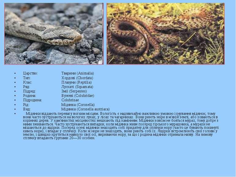 Царство: Тварини (Animalia) Тип: Хордові (Chordata) Клас: Плазуни (Reptilia) ...