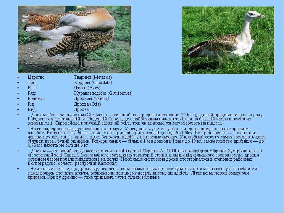 Царство: Тварини (Metazoa) Тип: Хордові (Chordata) Клас: Птахи (Aves) Ряд: Жу...