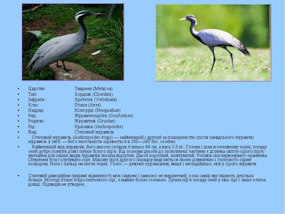 Царство: Тварини (Metazoa) Тип: Хордові (Chordata) Інфрати : Хребетні (Verteb...