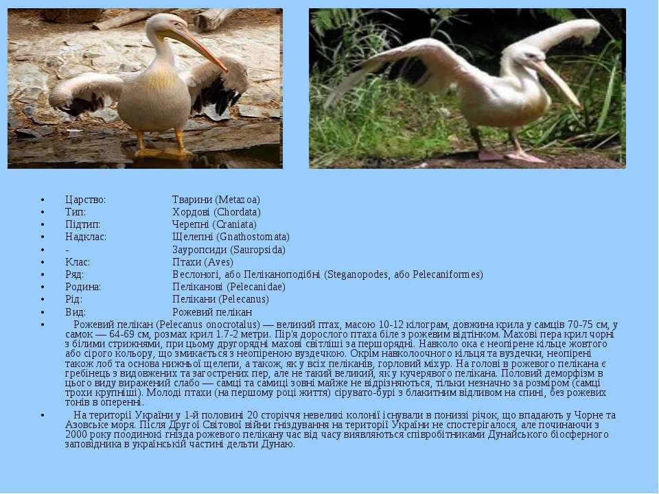 Царство: Тварини (Metazoa) Тип: Хордові (Chordata) Підтип: Черепні (Craniata)...