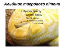 Альбінос тигрового пітона