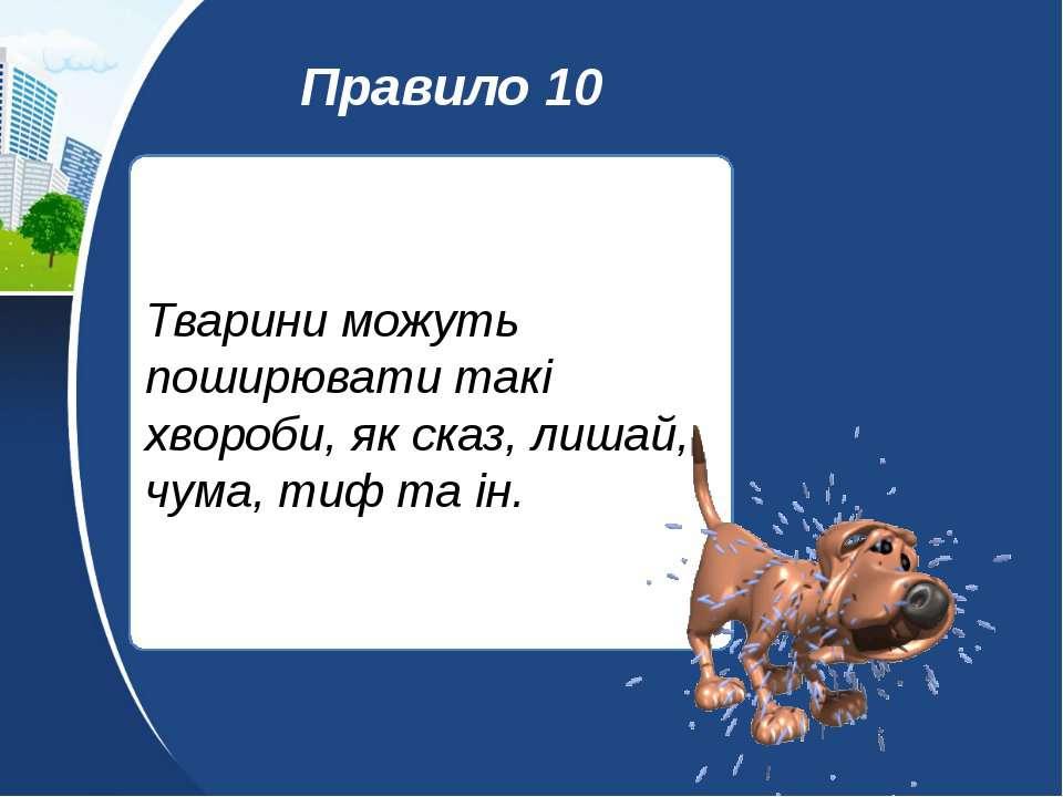 Тварини можуть поширювати такі хвороби, як сказ, лишай, чума, тиф та ін. Прав...
