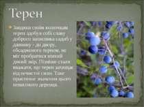 Завдяки своїм колючкам терен здобув собі славу доброго захисника садиб у давн...