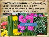 Трав'янисті рослини — багаторічні та однорічні рослини, в яких на зиму відмир...