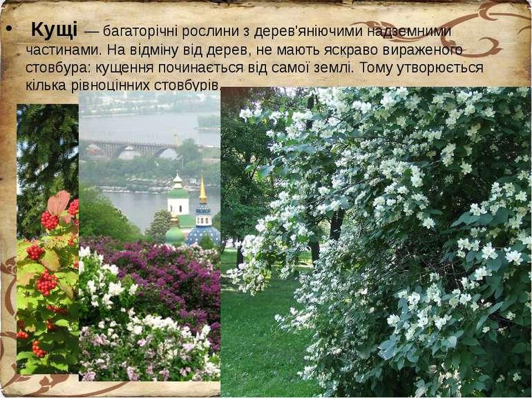 Кущі — багаторічні рослини з дерев'яніючими надземними частинами. На відміну ...