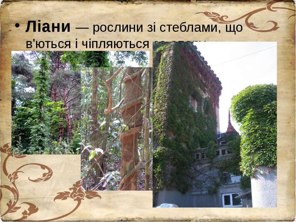Ліани — рослини зі стеблами, що в'ються і чіпляються за опору.