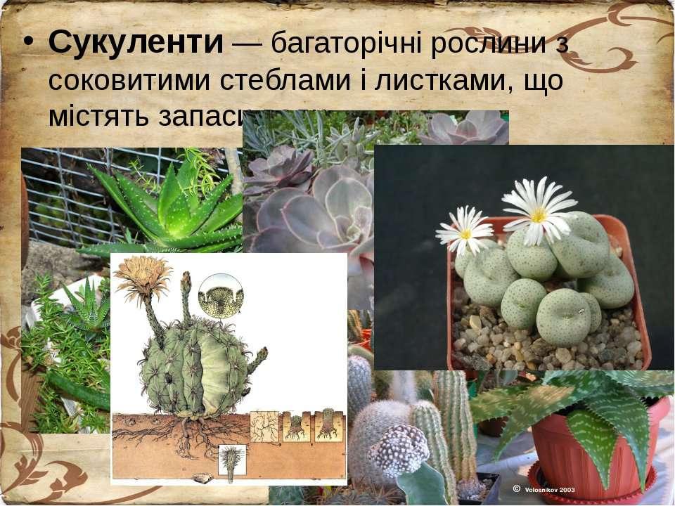Сукуленти — багаторічні рослини з соковитими стеблами і листками, що містять ...